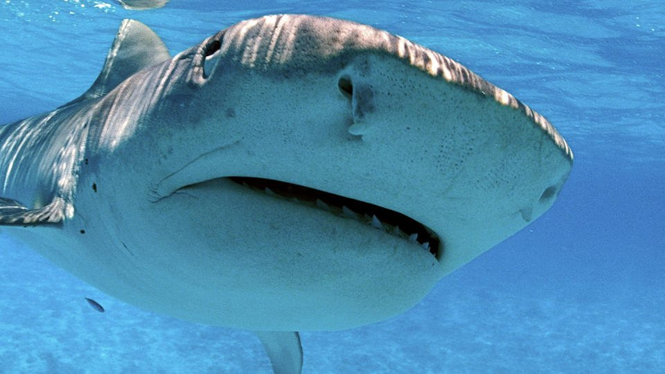 An American tourist was killed by a shark while scuba diving in Costa Rica