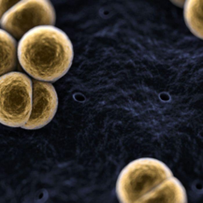 Meningococcal W death prompts vaccination update plea