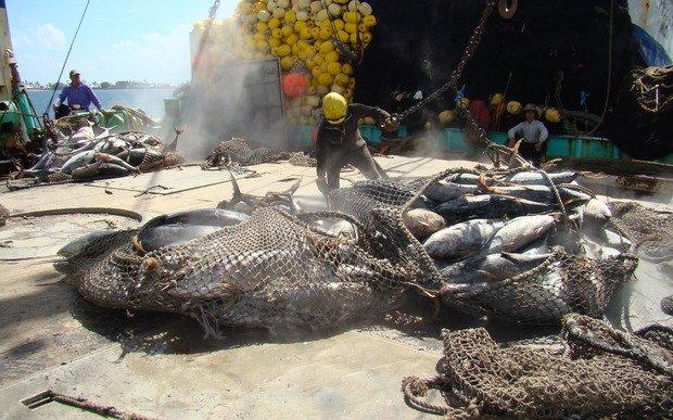 Access to fish stocks vital for revenue in Kiribati