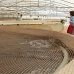How to farm fish in the Egyptian desert