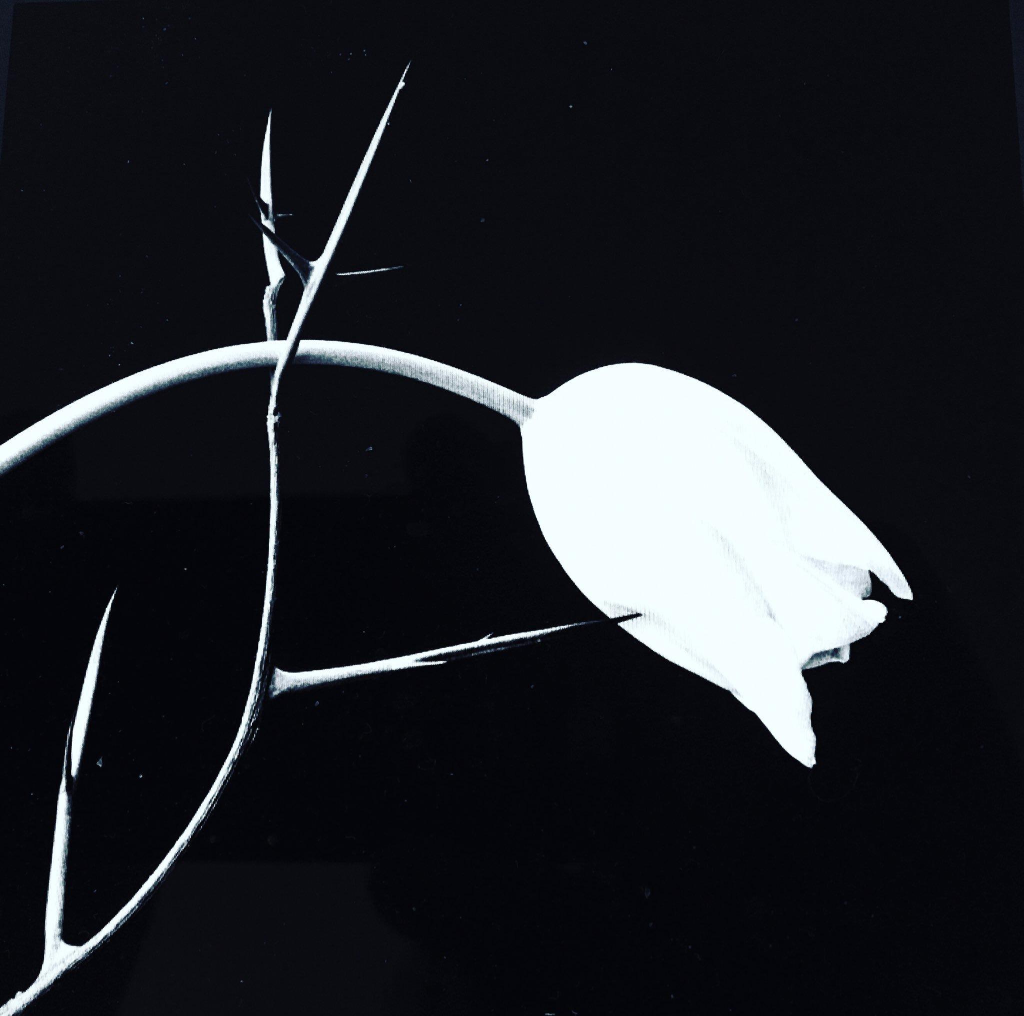 HOMBRES DE MAIS 54.🌞🌞🌞 - cover