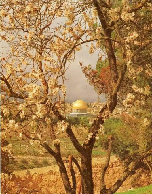 RT @7_7__h: #القدس_ستبقي_عربيه https://t.co/mIVv4B59cK