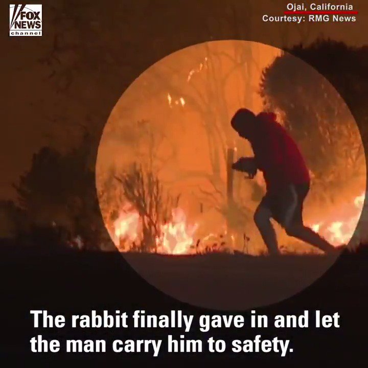 Heroic Move: Watch this man rescue a wild rabbit from the California wildfires.
