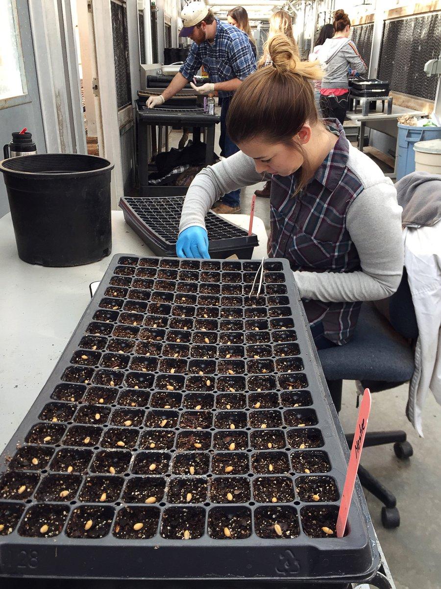 test Twitter Media - Teamwork is the best work. #ittakesavillage to plant 12,000 seeds in the greenhouse. #wheatblast #feedthefuture https://t.co/QUGuwYcQ9K