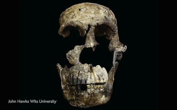 test Twitter Media - 📌  One of the most interesting science stories of the year: New evidence of mysterious Homo naledi raises questions about how humans evolved https://t.co/OXCXueQI5h #Bestof2017 https://t.co/6cFXNwW4pi