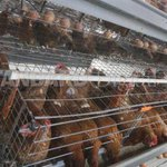 Farmer sets up mechanised poultry house to maximise on production and profits