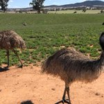 Why this emu farmer believes he may have struck oil