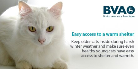RT @BritishVets: Keep older #cats safe & warm inside the house during harsh winter weather #StormCaroline ❄️🌨 https://t.co/Ik431rpxjO