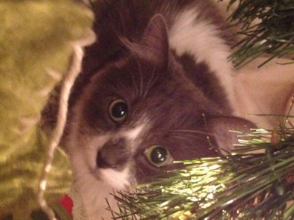I need to put up at least a small tree this season so I can get cute photos of cats like this one from 2012. https://t.co/udjJsSvSiv