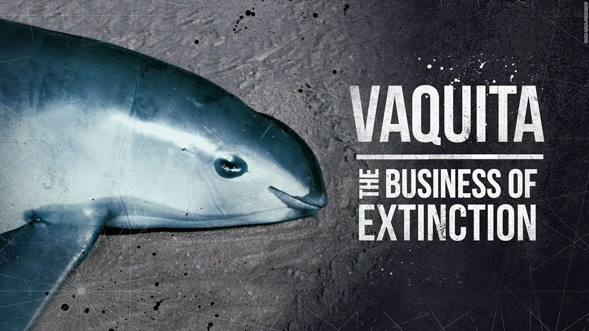 The Mexican government closed the ocean for business to protect this dying mammal