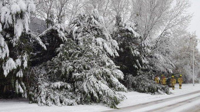 Honselersdijk Veel bomen plat door gewicht van de sneeuw. Brandweer mag met de kettingzaag aan de slag. https://t.co/FUnobkmpCC