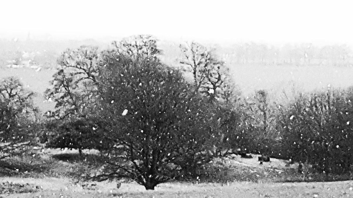 nature Black and white snow scene...
