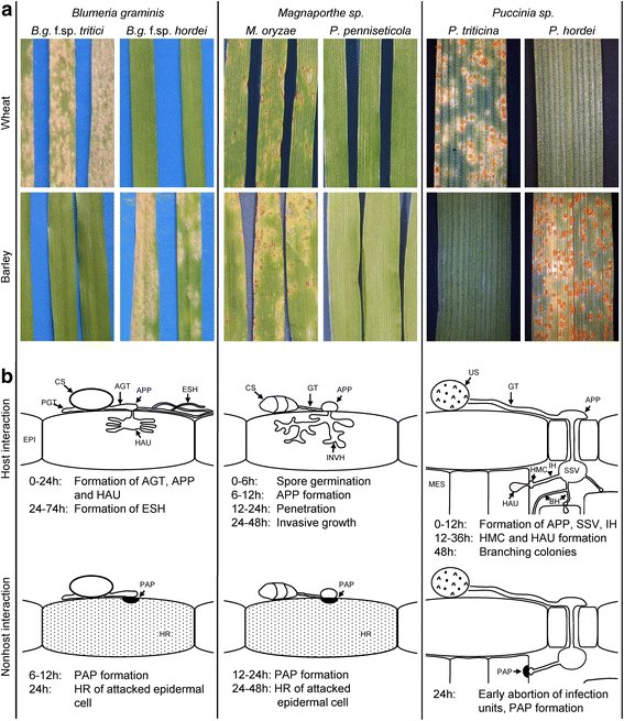 test Twitter Media - Analysis of non-host resistance to powdery mildew, cereal blast and leaf rust in wheat and barley @niabtag @BMC_series  https://t.co/HFv9YJ0hLX https://t.co/uXJeoK3LMj
