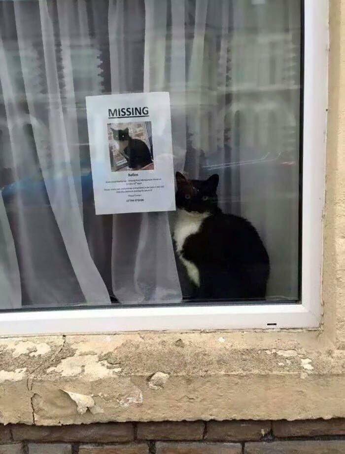 RT @NinetyFive_UK: The least missing cat ever. https://t.co/Eq7UfIuxL8