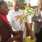 Uncertified avocado seedlings will cause poor yields – Bett