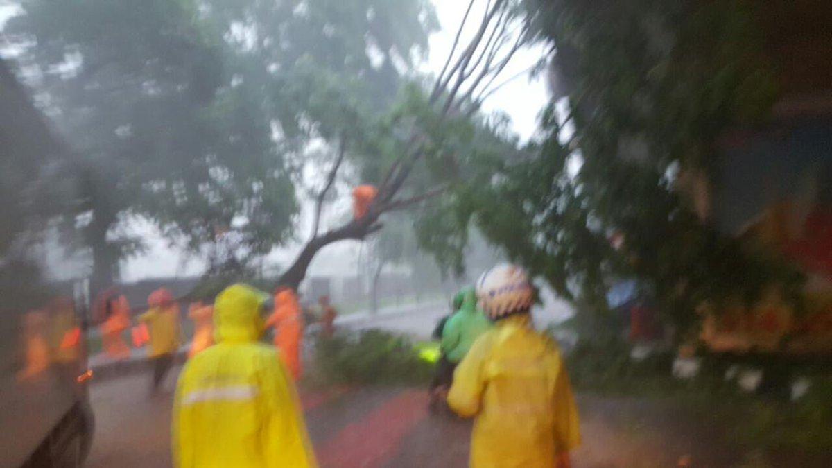 Hujan Lebat, Pepohonan Jakarta Tumbang https://t.co/PEdsYBS5I1 https://t.co/avT4ixofGf