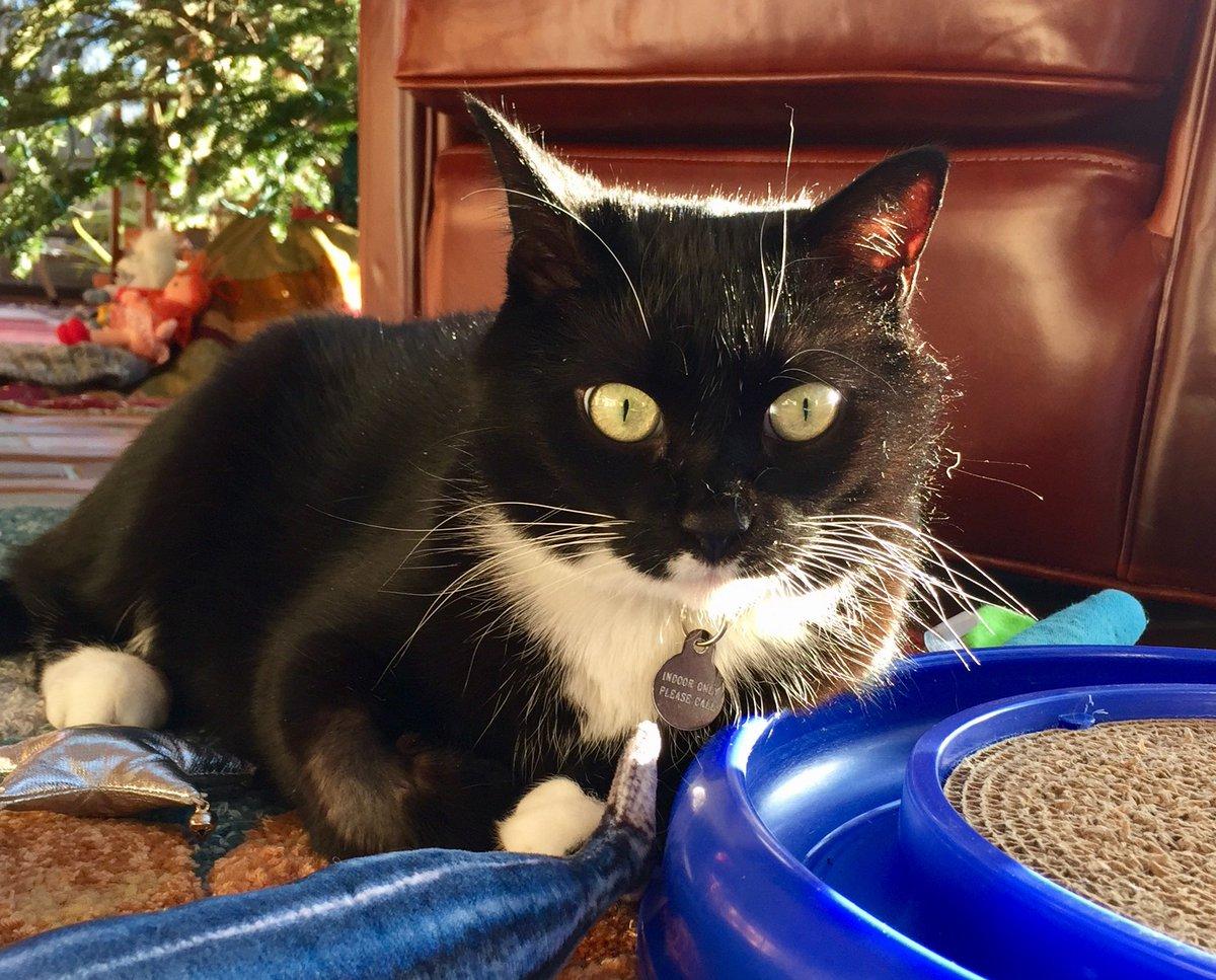RT @BlackCatFrazz: Happy #kittyloafmonday #ManicMonday 😸 https://t.co/7NktiFMk4A