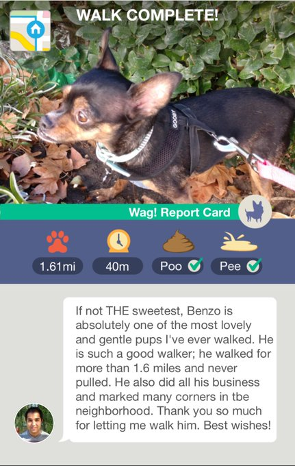 1 pic. Everytime Benzo gets walked by @WagsandWalks he comes back the happiest dog on this planet 😍 Makes