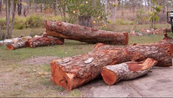 Police in Narok arrest illegal loggers