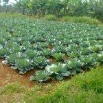 A case for organic farming