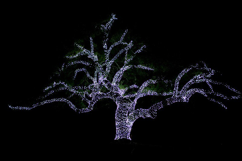 Where to enjoy holiday lights in Cedar Park, Round Rock, Georgetown and beyond