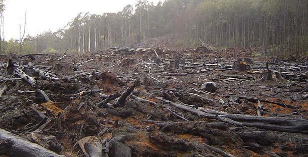 Help curb environmental degradation, religious leaders urged