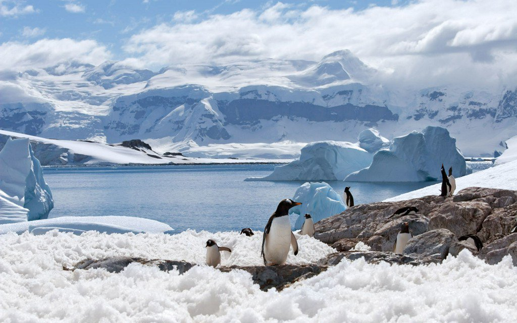 There Used to be Human-Sized Penguins Roaming Around New Zealand
