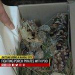Some Missourians using pet poop to thwart porchpirates