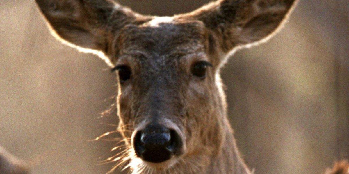 Chronic wasting disease confirmed in deer at Big Rapids farm