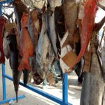 Team wins Sh100,000 in 4th Lamu fishing contest