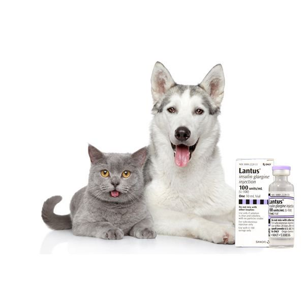 test Twitter Media - Have a pet with #diabetes? We now carry Lantus Insulin. More about this product: https://t.co/Np4VnYichq https://t.co/rWr981AuEh