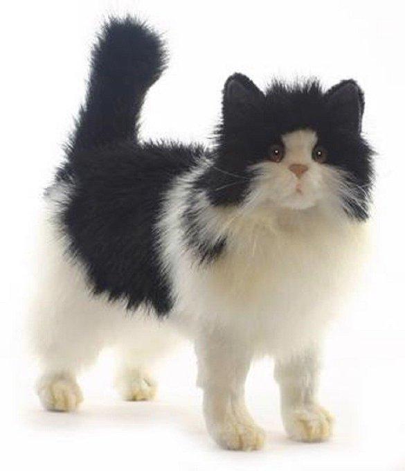 Hansa Toys Black And White Cat 4221 Plush Stuffed Animal Play Toy Gift New https://t.co/1xIGcfoXDu https://t.co/6eKp9JDMXH