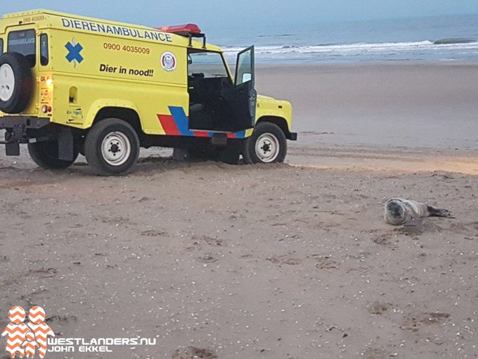 Baby zeehond aangespoeld op strand Ter Heijde https://t.co/Gu2Udi30Oq https://t.co/Yy1OV1K5tf