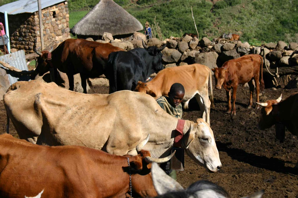 Small holder livestock farmers encouraged to form associations