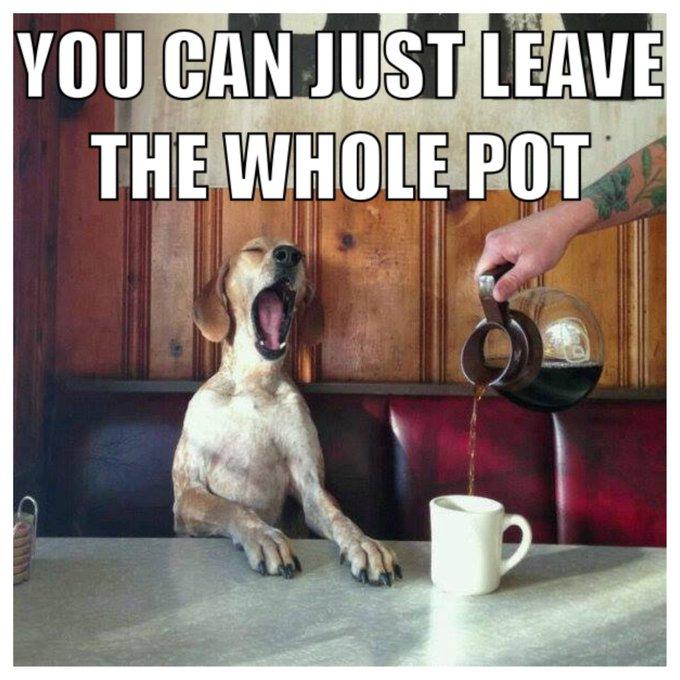 #goodmorning #wakeup #smellthecoffee #coffee #yawn #dog #LOL https://t.co/iltXNPLYLB