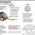 Pangolin traffickers opening up new routes: study
