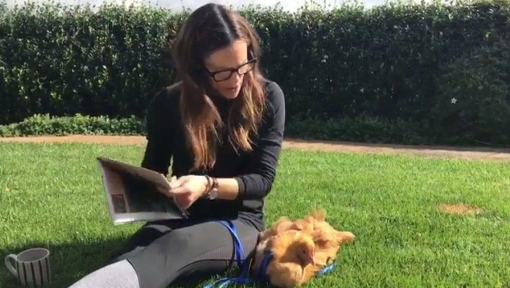 Jennifer Garner reads to her pet chicken! Watch the video: https://t.co/JyizFuae6f https://t.co/Zi9pB6USs2