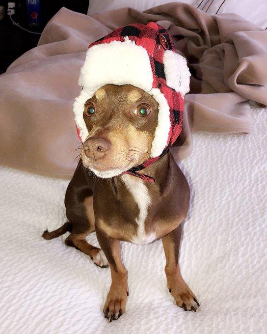 How cute is Rudy in his new hat ?! 🐾❄️😅 https://t.co/KYNDbJDDdw