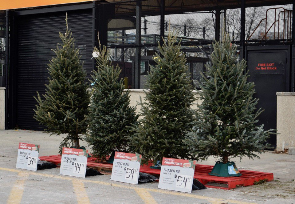 No 'Christmas tree shortage' reported in Western Massachusetts