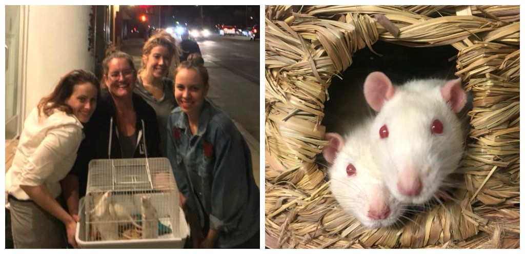 test Twitter Media - People drove 3 hours into a wildfire to save these rats 💕 https://t.co/HmkJhepTUM https://t.co/6yUJ875iTN