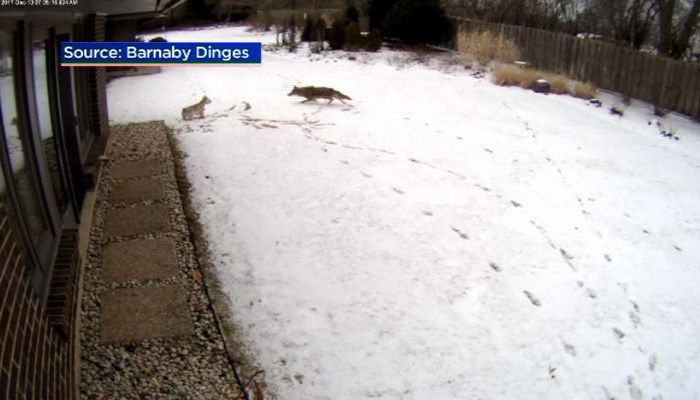 Coyote attack on terrier caught on surveillance video - wistv.com - Columbia, South Carolina