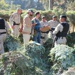 Van 35 personas detenidas por contrabando de pinabete