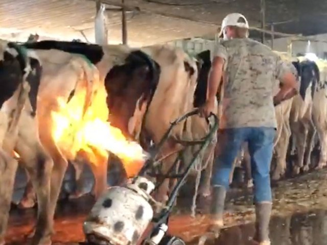 RT @abcactionnews: Disturbing video shows blowtorches used on cows at Florida dairy farm https://t.co/sSG5vZ9vFp https://t.co/L3umCiAl4m