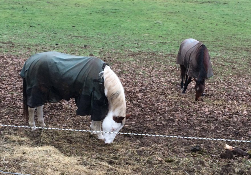 Oregon Horse Rescue desperate for public donations