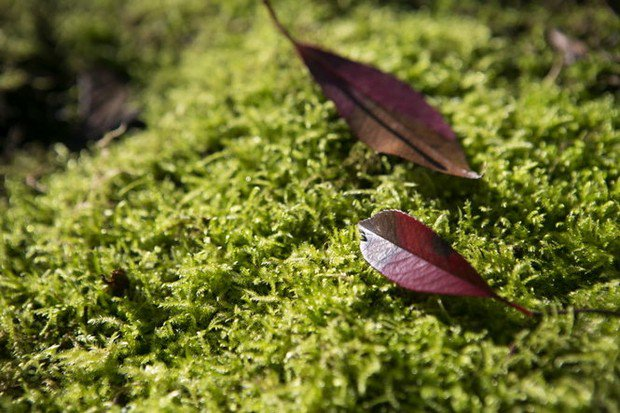 Controlling moss in your lawn starts with keeping grass healthy