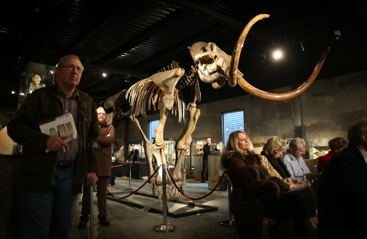 A woolly mammoth skeleton just sold; here's how much it went for
