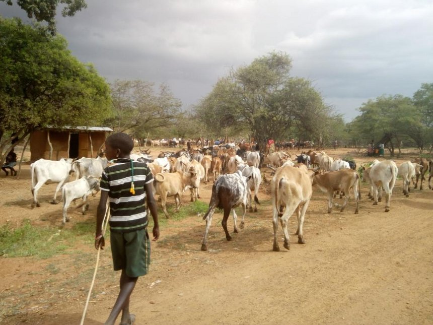 West Pokot invests in farming and livestock for food security