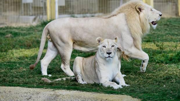 Dubai Safari closes doors early on Monday