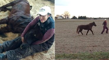 Pony left for dead in ditch one year ago is vet's Christmas miracle