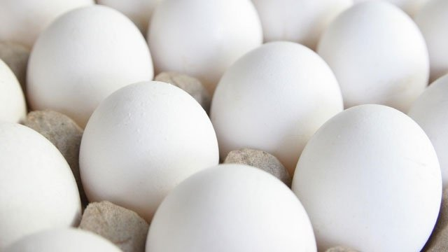 13 states sue to block cage-free eggs law in Massachusetts